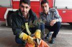 نجات گورکن زخمی توسط تیم آتش نشانی شهرداری لشت نشا+ تصاویر